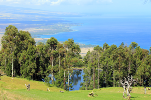 The 60-acre campus features a reservoir, water purification and photovoltaic systems, and stunning views of the Kohala Coast.